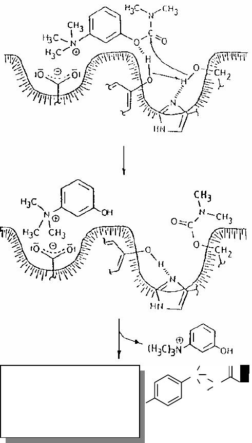 claritin reditabs 10 mg directions